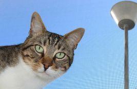 Udruženje: Nadležni da reaguju povodom dranja mačke na gradilištu Linglonga