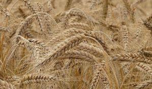 Poljoprivreda daje značajan doprinos bruto domaćem proizvodu