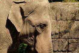 VIDEO: Otvorena prva bolnica za slonove u Indiji