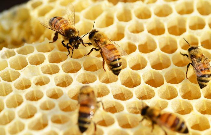 U Beču i do 200 miliona pčela za vreme leta, širom grada 5.000 košnica