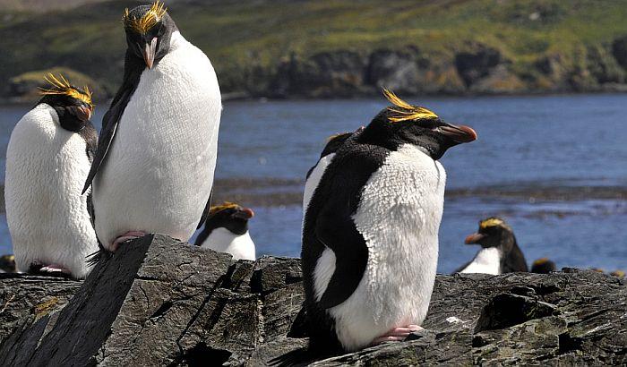 Gej pingvini u berlinskom zoo vrtu usvojili jaje