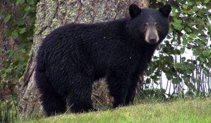 Medved na Aljasci ujeo ženu dok je koristila poljski toalet