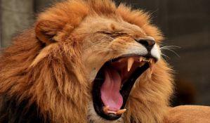 Lav napao čuvarku u zoo vrtu u Nemačkoj