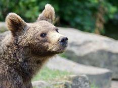 Lepa priča sa Kosova: Kasandra bila prva stanovnica azila za zlostavljane medvede