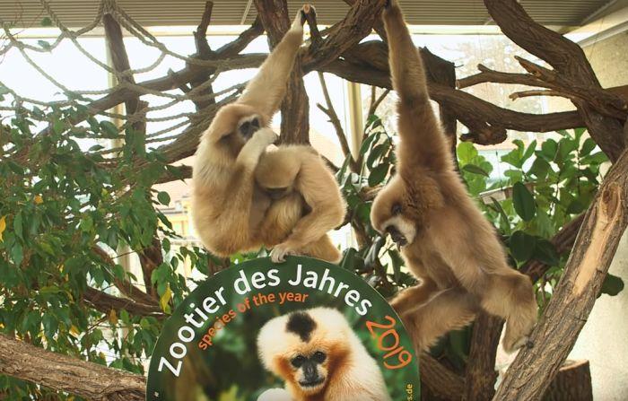 VIDEO: Raspevani majmuni proglašeni za životinje godine