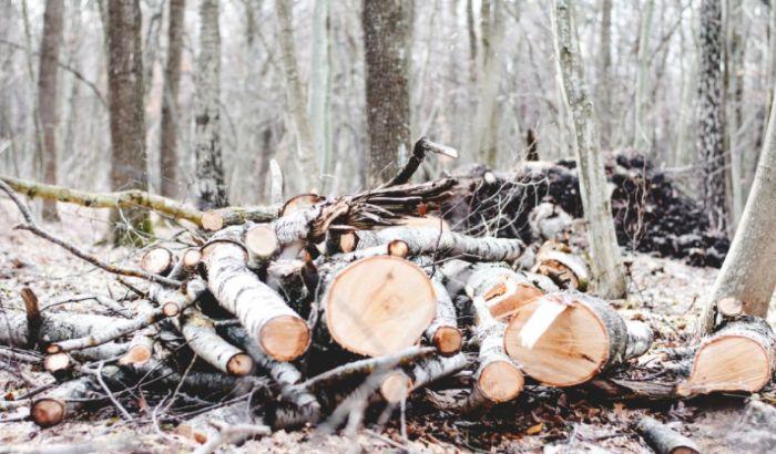 Predata peticija za očuvanje Fruške gore, ukazano na probleme sa upravljanjem nacionalnim parkom