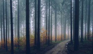 Poznatog slovenačkog alpinistu usmrtilo stablo pri seči u šumi
