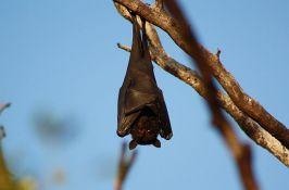 Društvo za zaštitu i proučavanje ptica organizuje onlajn predavanja o prirodnjačkim temama