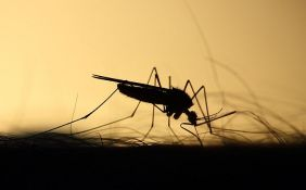 Upozorenje onima koji idu u Grčku da se čuvaju komaraca zbog virusa Zapadnog Nila