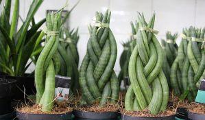 Više od 200 vrsta saksijskih i vrtnih biljaka na jednom mestu u Novom Sadu