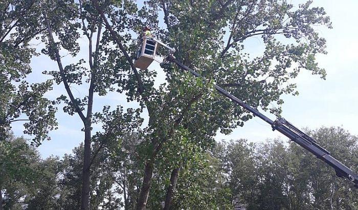 FOTO: Seča sedam starih topola u Limanskom parku, najavljena sadnja 300 mladih stabala