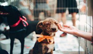 Firma koja zbrinjava pse u Temerinu koristi azil radnje registrovane za čišćenje u Vrnjačkoj Banji