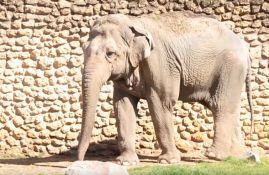 VIDEO: Uginula najtužnija slonica na svetu