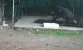 Tukao slona, životinja legla na njega i ubila ga
