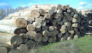 Bespravna seča šume kraj Tise ugrožava odbrambeni nasip
