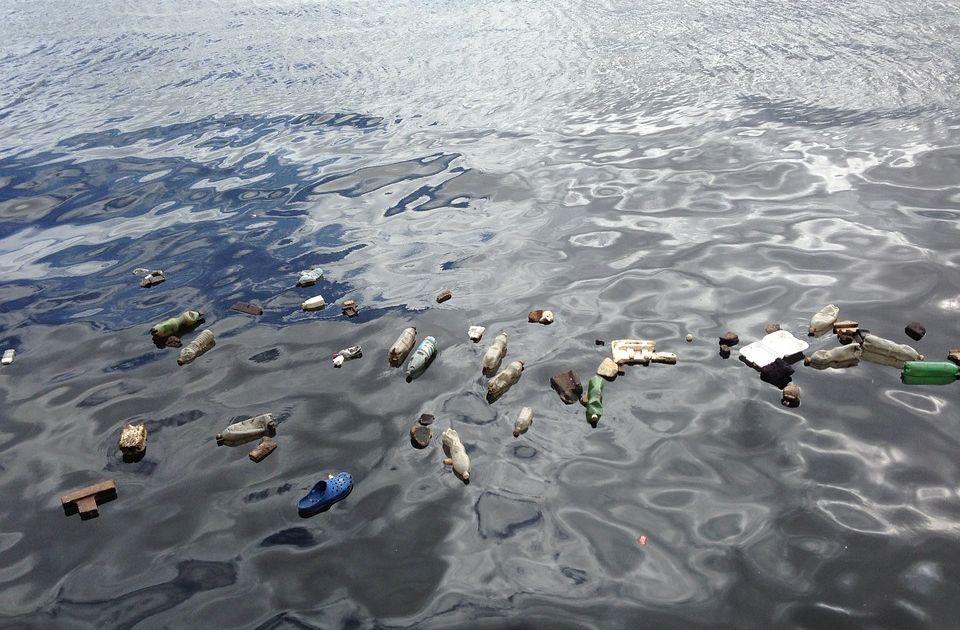 U utrobi kita pronađeno 16 kilograma plastike