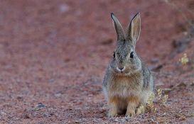 VIDEO: Veganka spasila 14 zečeva i pri tome ubila njih 90