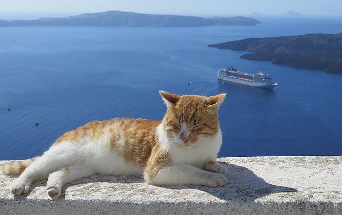 Tražili nekog ko će za 350 evra brinuti o mačkama, javilo se 35.000 ljudi