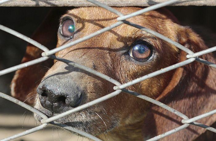Vlast moli građane da ne jedu pse