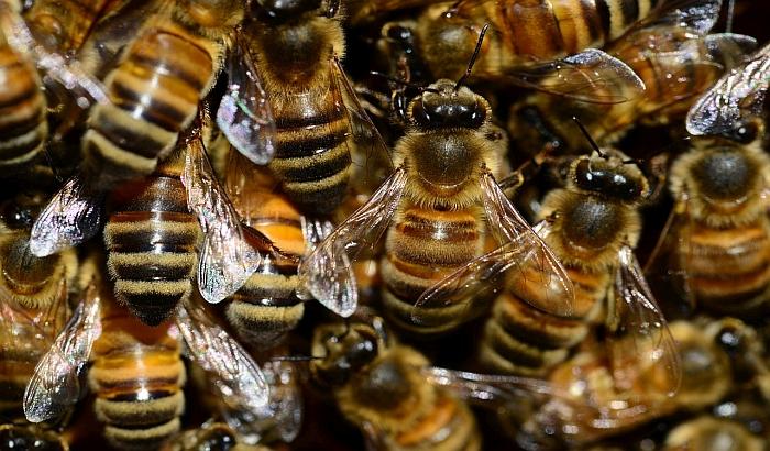 Roj pčela napao četiri muškarca u Futogu, jedan teže povređen
