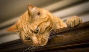Japanski grad dodelio zahvalnicu mački jer je doprinela spasavanju čoveka