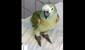 VIDEO: Papagaj uhapšen zbog pomaganja narko-dilerima