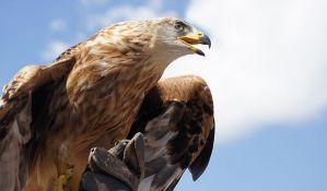 Orlovi SMS-ovima iz rominga potrošili budžet ruskih ornitologa