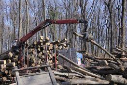 FOTO: Nastavlja se seča fruškogorskih šuma, građani ponovo protestovali
