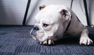 Psi umeju svašta da pojedu, ali baš 19 dečjih cucli?