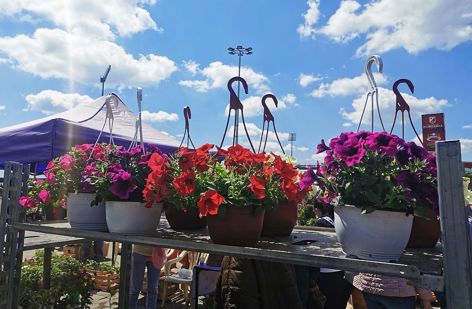 FOTO: I ovog vikenda Novosadska cvetna pijaca na platou ispred Spensa
