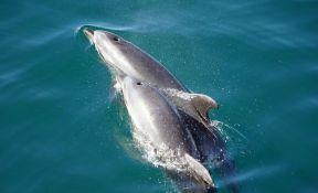 Devet dana star delfin uginuo tokom nastupa u akvaparku