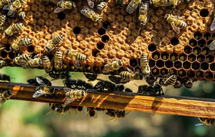 VIDEO: Morgan Frimen svoj ranč pretvorio u raj za pčele da bi ih spasao