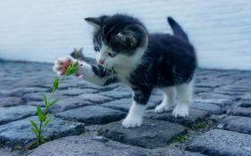 Mitovi o mačkama