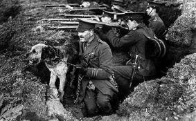 Životinje koje su doprinele ratnim naporima u Prvom svetskom ratu