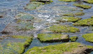 Pronađena nova vrsta algi za floru Srbije u parku prirode Rusanda