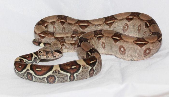U koferu putnika na aerodromu pronađena zmija od 2,2 metra