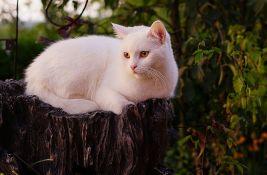 Pronašao svog mačka u kanjonu Morače posle mesec dana