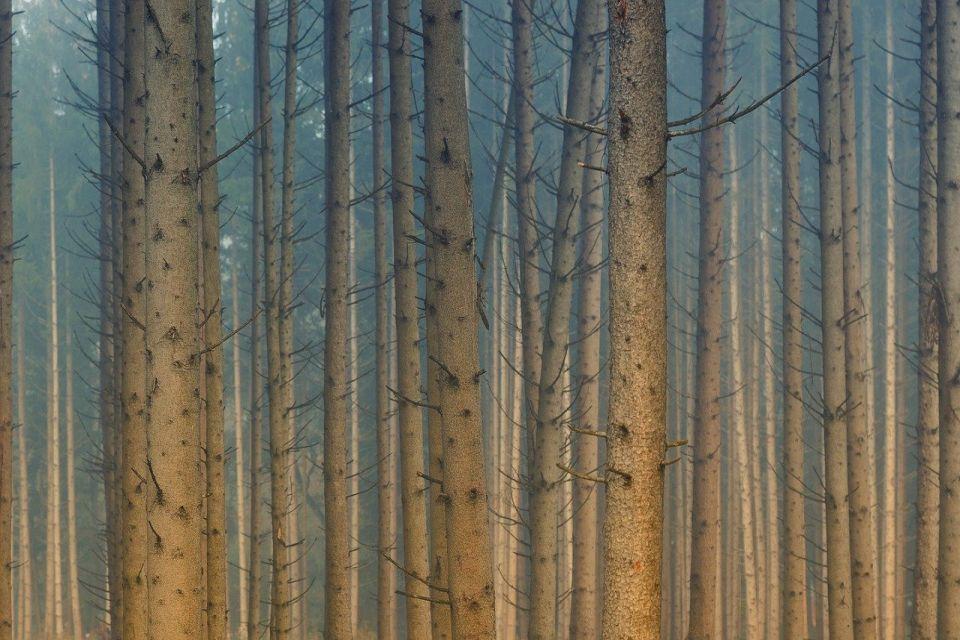 Od danas u Severnoj Makedoniji potpuna zabrana kretanja u šumama