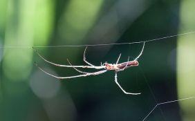 Da se udruže, paukovi bi proždrli čovečanstvo za godinu dana