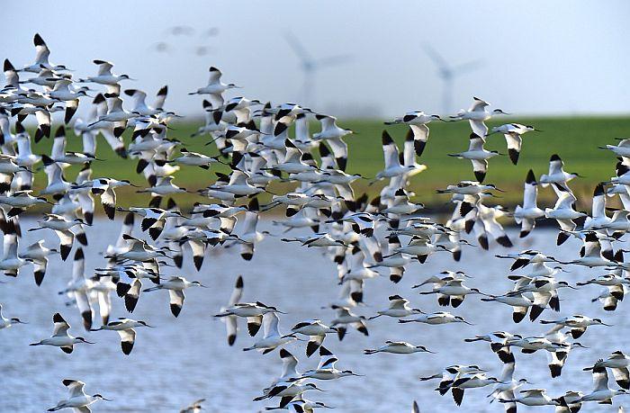 Ptice zbog klimatskih promena sve manje