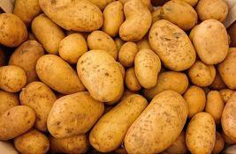 Krompir će biti skup, rod manji i do 70 odsto