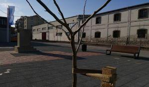FOTO: Zasađeni jasenovi kod Svilare, u planu i sadnja ukrasne trešnje i šiblja