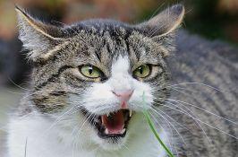 Britanac umro od besnila posle ugriza mačke u Maroku
