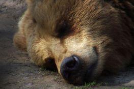 Medved upao u kuću, rasturio sobu i zaspao u ormanu