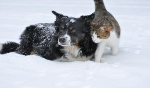Kako da zaštitite svog ljubimca tokom hladnih zimskih dana