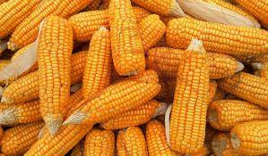 Raste izvoz kukuruza, neće biti zabrana ili uvođenja taksi