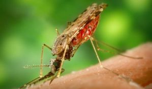 Od danas prskanje komaraca u Novom Sadu