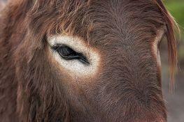 Hrvatska: Automobilom naleteo na krdo magaraca, stradalo šest životinja