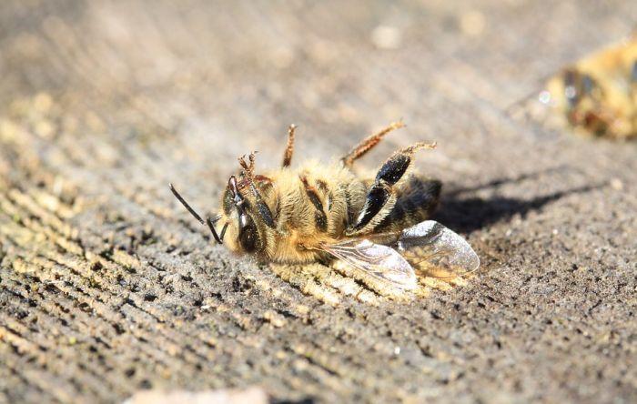 Počinju kontrole zasada da se utvrdi ko ubija pčele, traži se pomoć građana i MUP-a