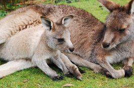 Podignuta optužnica protiv dvojice tinejdžera za ubistvo 14 kengura